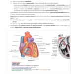2018-anatomi-10