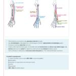 2018-anatomi-4