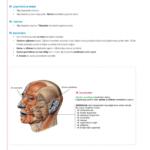 2018-anatomi-7