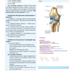 cb-anatomi-3