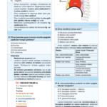 cb-anatomi-6