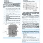 cb-fizyoloji-10