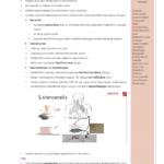 info-mikrobiyoloji-9
