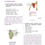 t-anatomi-1