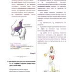 t-anatomi-3