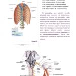t-anatomi-4