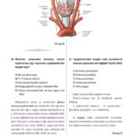 t-anatomi-5