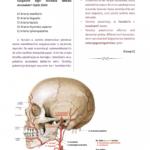 t-anatomi-6