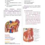 t-anatomi-7