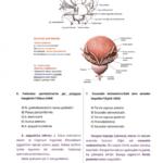 t-anatomi-8